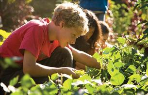 New Edible and Living Schoolyard Farm-to-Table Summer Camp Program at Classic Thyme, Westfield, NJ